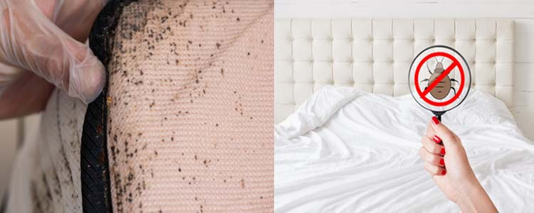 Bed Bug Control Spring Hill